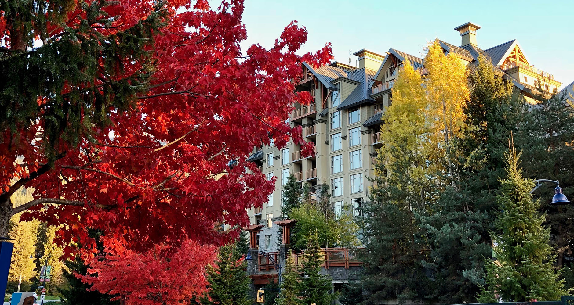 Autumnal coloured trees in Whistler Village, Canada